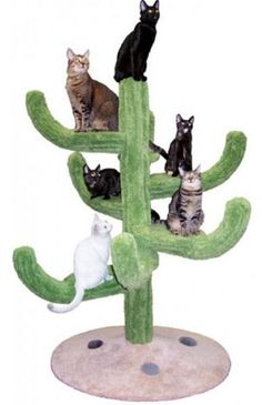 Cozy Cactus Cat Tree - Fun furniture, condos and climbing gyms for cats and kittens. Cat Box Furniture, Cactus Cat, Cat Towers, Cat Climbing, Cat Room, Cat Condo, Scratching Post, Cat Tree, Tree Tree