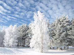 Winter in Estonia Estonia #VISITESTONIA #COLOURFULESTONIA #VISITESTONIA Proof that Estonia is not grey!