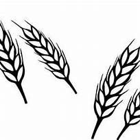 Images Wheat Bundle Black And White Clip Art
