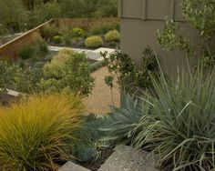 Drought Tolerant Design, Pictures, Remodel, Decor and Ideas - page 2