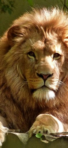 Lions and kittens dating site