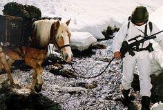 Horses, Animals, Austria, Animales, Animaux, Animal, Animais, Horse