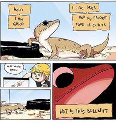 Leopard gecko comic