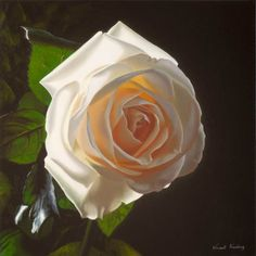 White Gold  Oil painting of white rose by Irish Artist Vincent Keeling Signed limited edition prints available www.keelinggallery.com