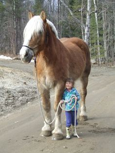 Little kid with the lead line to a huge horse!
