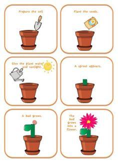 spring garden flower life cycle preschool printable