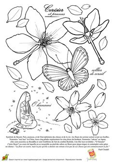 Des fleurs de cérisier Prunus, à embellir et à colorier