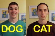 Dogs vs. cats video This is so funny!