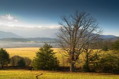 Cades Cove is such an amazing place full of breathtaking views! Pigeon Forge Cabin Rentals, Gatlinburg Cabin Rentals, Smoky Mountains Cabins, Great Smoky Mountains, Cades Cove, Mountain Homes, Travel Usa, National Parks, Vacation