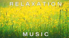 6 Hours Beautiful Relaxing Music - Best For Stress Relief, Meditation, Calm, Deep Sleep & Spa Music Station, Instagram Giveaway, Relaxing Music, Ielts, Stress Relief, Fun Workouts, Online Marketing, Phoenix, Meditation