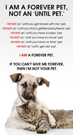ALL pets are FOREVER PETS. If you can't give them forever, you don't deserve the privilege of their companionship.
