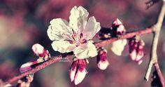 peaches by nari-me.deviantart.com