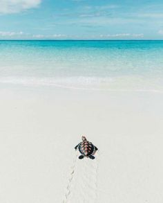 Baby sea turtle taking its first step to the sea in Madagascar