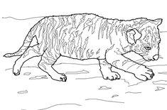 tiger ausmalbilder - ausmalbilder für kinder