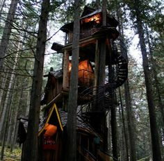 To Live In A Tree On Pinterest Treehouses Tree Houses