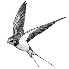 Swallow-bird thought to protect the souls of the dead Bird Drawings, Tattoo Drawings, Body Art Tattoos, New Tattoos, Tattoos For Guys, Sleeve Tattoos, Cool Tattoos, Tatoos, Mandala Tattoo Design