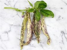 bean dragon tongue  (rare heirloom seed site)