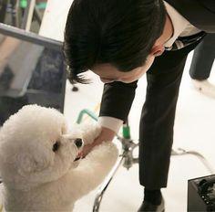 Joon Park, Park Seo Jun, Disney Princess Drawings, Park Min Young, Seo Joon, Kdrama Actors, Bichon Frise, My King, Cute Dogs And Puppies