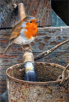 Robin by Andrew Hutchinson All Birds, Cute Birds, Little Birds, Robin Redbreast, Robin Bird, Tier Fotos, Bird Drawings, Bird Pictures, Wildlife Art