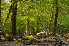 Der Wald im Presberger Tal, Landschaft, aufgenommen im April