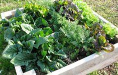 Att starta sin första köksträdgård