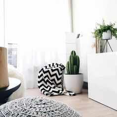 a big cactus in the brussels round #cactus #home #plants #greenery #indoor #style