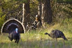 Spring Turkey Hunting Tips from the Pros
