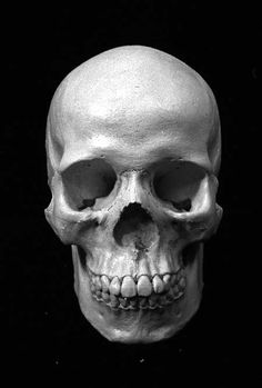 Blaqmercury In Mind Simple Skull Skull Anatomy, Skeleton Anatomy, Anatomy Art, Human Anatomy, Chicanas Tattoo, Yakuza Tattoo, Skull Reference, Simple Skull, Sketch Tattoo Design
