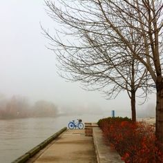 A foggy fall morning in Port Credit, Ontario, Canada Autumn Morning, Foggy Morning, Canada, Ontario, Toronto, The Neighbourhood, Scenery, Country Roads, City