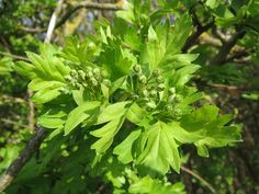 Top Species Native to Britain Habitats, Britain, Herbs, Leaves, Flowers, Pictures, Florida, Top, Photos