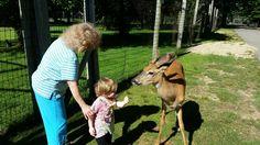 Wisconsin Deer Park (Wisconsin Dells): Top Tips Before You Go - TripAdvisor