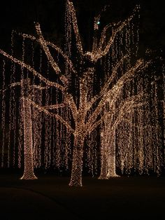 Diy how to wrap a tree in lights led christmas lights christmas pretty christmas lights aloadofball Choice Image