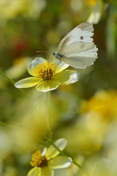 The Softness Of Nature With The Flowers and Butterfly