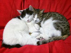 my cat Hana and Nyan