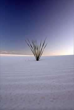"""White Sands National Monument, New Mexico,"" by gakout"