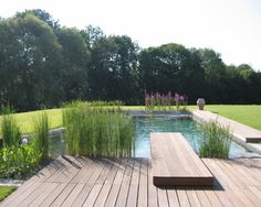 photo of natural garden with swimming pool and decking natural pool