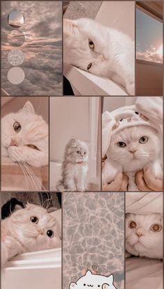 Aesthetic cat wallpapers | Cat wallpaper, Cute wallpaper backgrounds, Cute emoji wallpaper