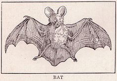 public domain fox illustration - Google Search