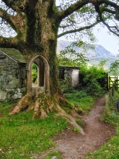 "ollebosse: ""  Tree Portal - Ireland """