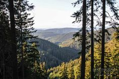 Rothaarsteig, Sauerland, Germany - plan on hiking this trail in Sept 2014, 154 km