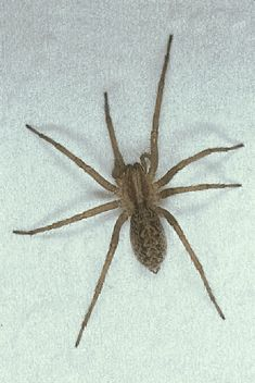 16 best grass spiders images in 2013 hand spinning spiders grass rh pinterest com