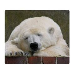 Polar bear 003 Throw Blanket by JAMFoto - CafePress Shop Polar bear 003 Throw Blanket designed by JAMFoto. Lots of different size and color combinations to choose from. Polar Bear Cafe, Cute Polar Bear, Polar Bears, Grizzly Bears, Polar Bear Christmas, Small Christmas Stockings, Green Art, African Elephant, Big Cats