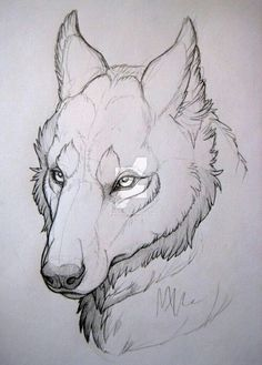 by MonsterMyrr.devia… on – Wolf-head study. by MonsterMyrr.devia… on – Wolf-head study. by MonsterMyrr.devia… on – Animal Sketches, Animal Drawings, Drawing Sketches, Wolf Drawings, Drawing Drawing, Drawing Tips, Drawing Animals, Drawing Ideas, Wolf Head Drawing