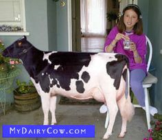 Mini milk cow. For those little farmsteads and the gentleman farmers who don't like goat milk.