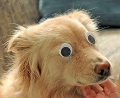 Crazy eyes!