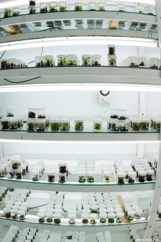 10 more Pins for your In vitro plantlets board - Outlook Web Access Light