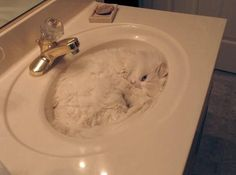 These cats are clear proof that there is no place a cat can, and will not go. It's like their mission in life is to fit into everything possible... Make sure to check previous posts on super cute and funny cats: - 21 Adorable Cats Who Just Want A Hug  - 22 Hilarious Pictures Of Wet Cats  - 38 Struggles Only Cat Owners Will UnderstandCheck out35 Cats Who Prove That No Place Is The Wrong Place For A Cat: Part 2 Make sure to check previous posts on super cute and funny cats: - 21 Adorable Ca...
