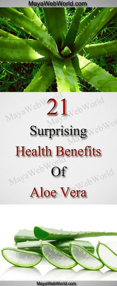 21 Surprising Health Benefits of Aloe Vera – MayaWebWorld