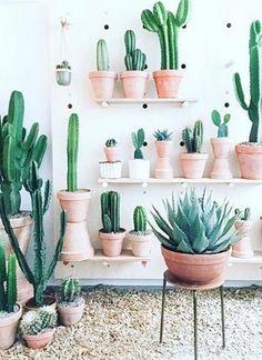 DIY Kaktus Deko