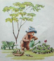Image of paddington in the garden